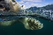 Polar bear swimming in the Hudson Bay 1st place Asferico 2014