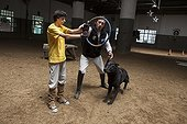 Child making a trust exercise with a dog - Argentina ; Emmanuel 13 years with cerebral palsy comes to the center every week for 7 years. He now works three pillars of riding Assisi Balance and Jump.<br>Equitherapy in partnership with the AAAEPAD Association and Ariel Pagani équitherapist<br>Asociacion Argentina de Actividades para Ecuestre Discapacitados