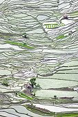 Rice paddies terraced mountain - Yunnan China