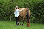 Magnetic therapy on a horse