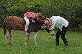Magnetic therapy on a donkey