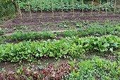 Vegetables in an organic kitchen garden