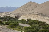 Oued in the valley of Poroma - Nazca Desert Peru