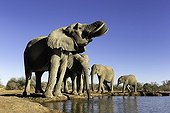 Elephants drinking at a waterhole - Botswana