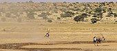 Oryx at the water and tornado - Kgalagadi Kalahari