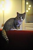 Kitten and reflection of light