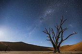 Milky Way over Dead Vlei - Soussvlei - Namibia