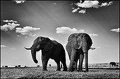 Elephants on the banks of the Chobe River - Botswana