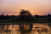 Hippos in the water at sunset - Okavango Botswana