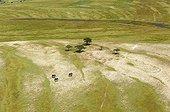 Elephants on the banks of the Chobe - Botswana Okavango