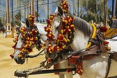 Decorated horses at the Feria del Caballo - Andalusia Spain