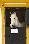 Stallion in their stable - Feria del Caballo Andalusia Spain