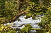 Roaring River - Willamette National Forest  Oregon USA ; Aufderheide Memorial Drive