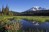 Mount Rainier and Reflection Lake -  Washington USA ; Cascade Mountains
