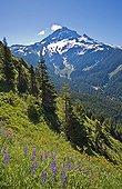 Mount Hood and wildflowers on Bald Mountain - Oregon USA ; Cascade Mountains