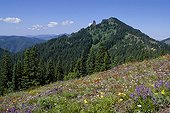 Cone Peak meadow with Iron Mountain - Willamette NF Oregon ; <br>Cascade Mountains