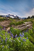 Bird Creek Meadows - Mount Adams Recreation Area Washington ; Yakama Indian Reservation<br>Cascade Mountains