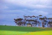 Agricultural landscape - Eastern Cape South Africa