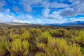 Karoo desert - Camdeboo NP Eastern Cape South Africa