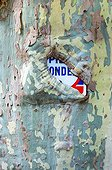 Plane tree bark covering a sign