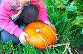 Petite fille récoltant un potiron au potager