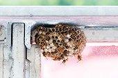 Wasp nest under a balustrade