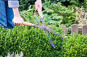 Pruning of box hedge in a garden with shear pairs