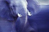 Eléphant d'Afrique en Tanzanie