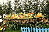 Cart of squashes at Folies Flore 2014 - Mulhouse - France