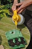 Sowing of cucumber 'Long vert d'Alan' in a kitchen garden
