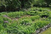 Flowered kitchen garden