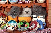 Half Persian kittens in bowls and salt box - France ; in front of a shelf of cheese themed Kittens<br>Age: 5 weeks