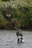 Grizzly on the shore and fisherman armed - Katmai Alaska USA