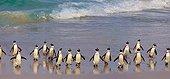 Jackass Penguins on a beach - Boulders Beach South Africa