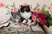 Kittens on cloth embroidered with roses - France ; Age: 8 weeks