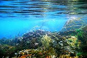Algae under the surface - Brittany France