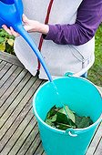 Making of comfrey manure in a garden