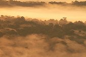 Nature Reserve Nouragues at dawn - French Guiana