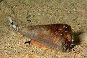 Virgin cone on sand - New Caledonia