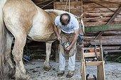 Blacksmith working on Trait Comtois horse - France ; Parrage and horseshoe poses