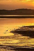 Sunset on the Lac du Der - Champagne France