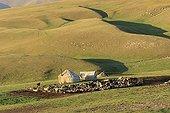 Kirghiz encampment and small livestock - Kyrgyzstan