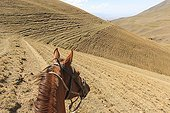 Horse and tracks made by cattle in the hill - Kyrgyzstan