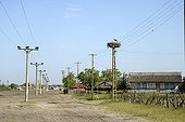 White storkat  nest on electric post - Romania