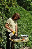 Sowing of corn in a kitchen garden