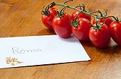 Harvest of tomato seeds ; Dried tomato seeds in an envelope