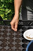 Sowing of fennel in tray in a garden
