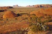Petrified Dunes - Monument Valley Navajo Tribal Park USA ; Mystery Valley