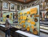 Fossiles du Musée d'histoire naturelle de Berlin - Allemagne ; Museum für Naturkunde. Naturkundemuseum ou Humboldt-Museum