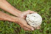 Rubber harvest - Kalimantan Indonesia ; WWF-Indonesia